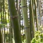 むしろ不用になった乾いた竹が良い