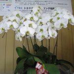 TECバイオマス小型炉で育てた胡蝶蘭 6ヶ月も可憐さを提供してくれています。