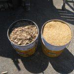 収穫後の籾殻を竹と一緒に燃やしました。連続的に籾殻未燃分を回収可能?