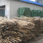 梅雨の候にも、初夏の陽射しは凄い。十割すれば濡れた竹もすぐ乾きます。